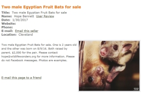 Wildlife Wonders sells bats into the cruel exotic pet trade